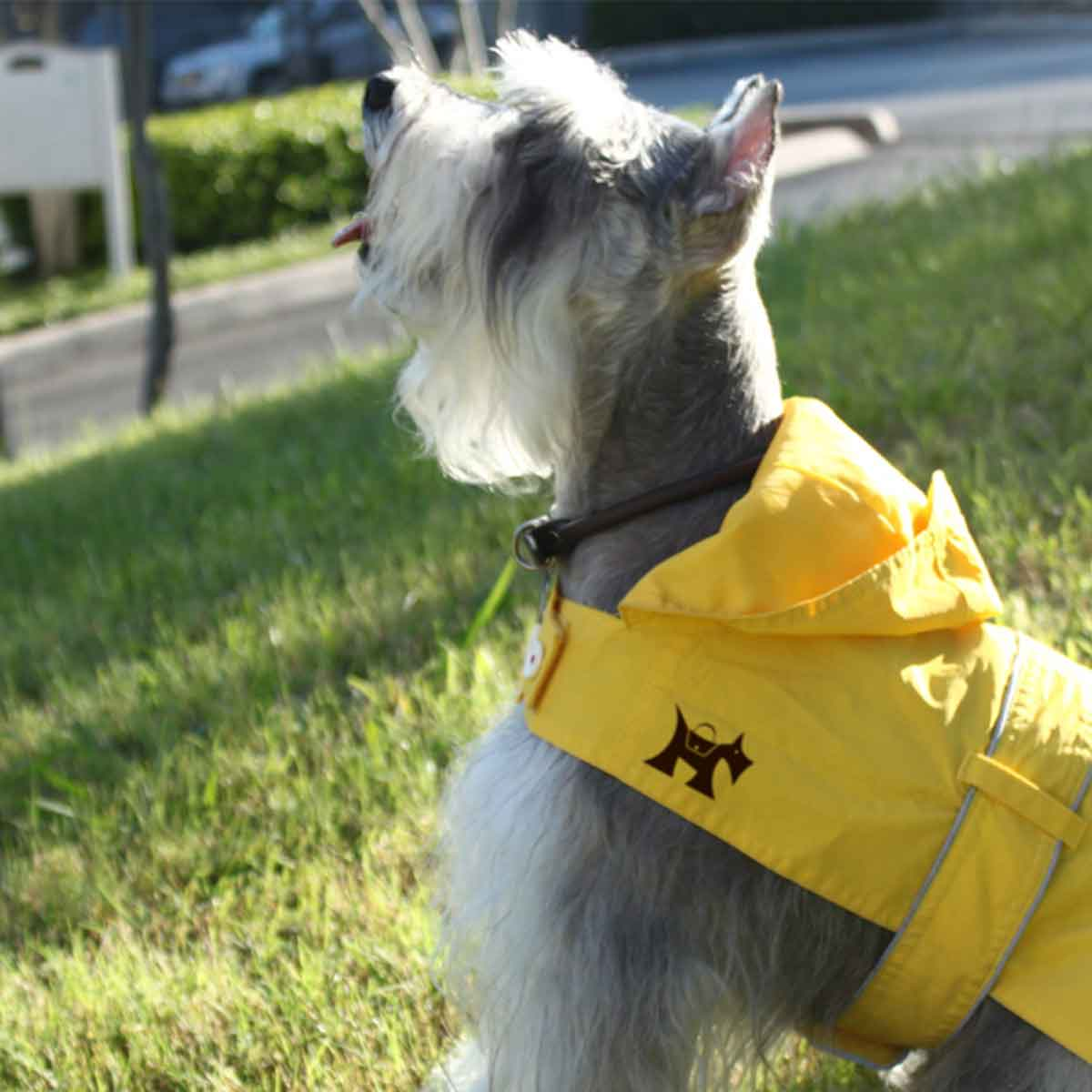 Branded raincoat on dog